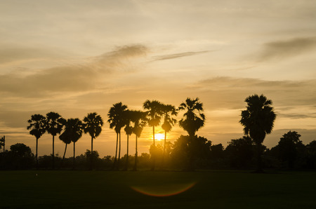 palm trees on the background of a beautiful sunset photo