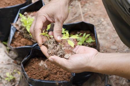 seeding: plant seeding