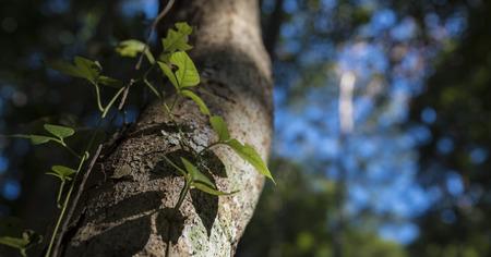 nature abstraite: caract�re abstrait, feuille de soleil