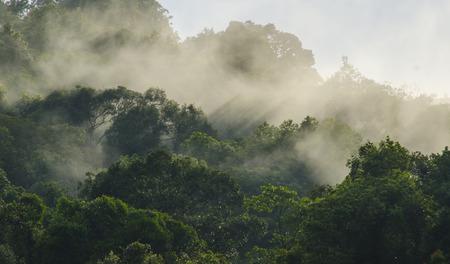 Rainforests filled with steam and moisture, Khao Yai National Park Foto de archivo