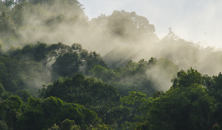 early fog: Rainforests filled with steam and moisture, Khao Yai National Park Stock Photo