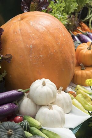 originate: Pumpkin in various shapes and colors. Stock Photo