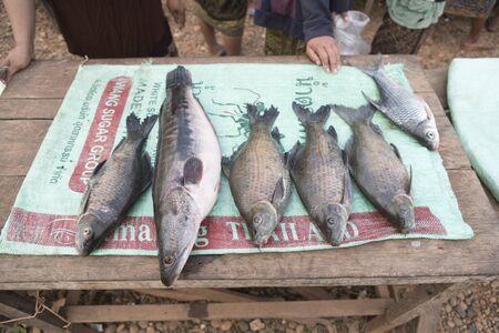 stalls: Stalls selling fish in Laos Editorial
