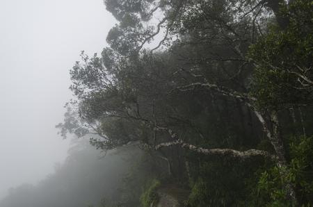 yai: tropical rainforest,Khao Yai National Park Thailand