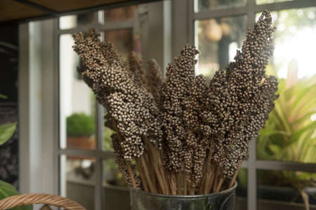dried flower arrangement: Coffee shop decorated with dried flowers