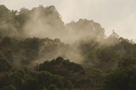 aerial view: tropical rainforest,Khao Yai National Park Thailand