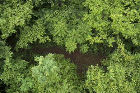 aerial views: forest top view Stock Photo