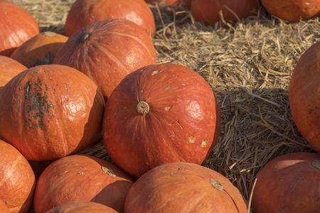 giants: giants pumpkin Stock Photo