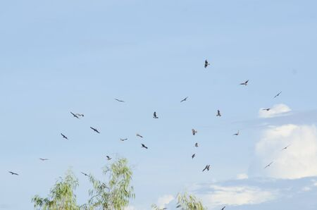 black hawk: Black Hawk with blue sky Stock Photo