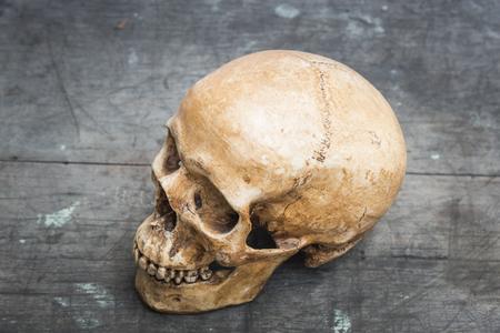 cadaver: human skull on wood background Stock Photo