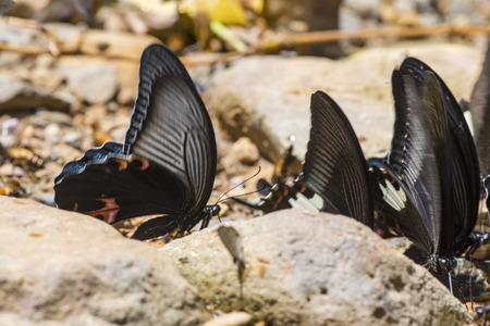 kaeng: butterfly on the ground at Kaeng Krachan National Park, Thailand Stock Photo