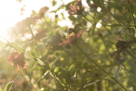 during: flower grass to light during sunset . Stock Photo