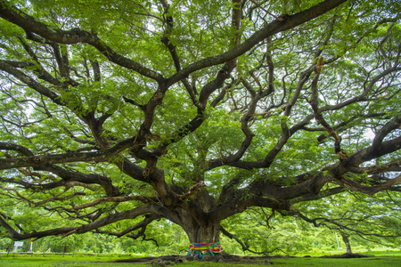 branch of big tree
