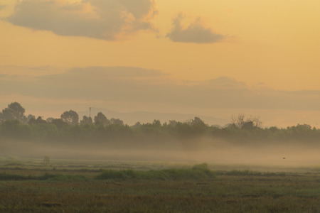 land management: Thailand local rice paddy field with sunset