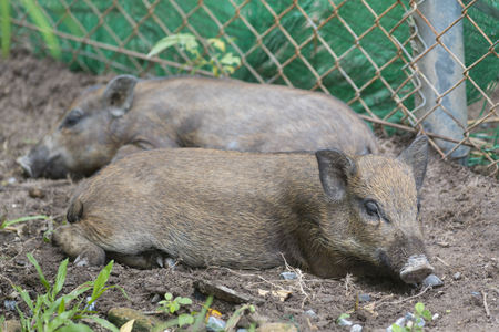 zoo youth: Baby wild boars in the zoo