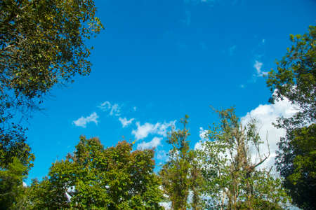 canopy: canopy tree cover with blue sky