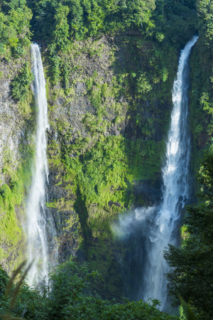 daintree: Creek in rainforest