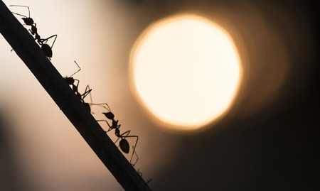A parade of ants 스톡 콘텐츠