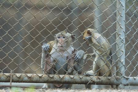 monkey in cage Banco de Imagens