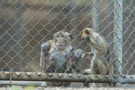 monkey in cage Stok Fotoğraf