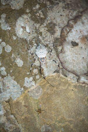 tree bark: tree bark texture