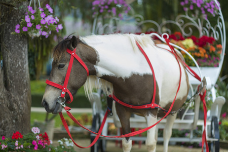 lat: taxi horse in Da Lat, Vietnam