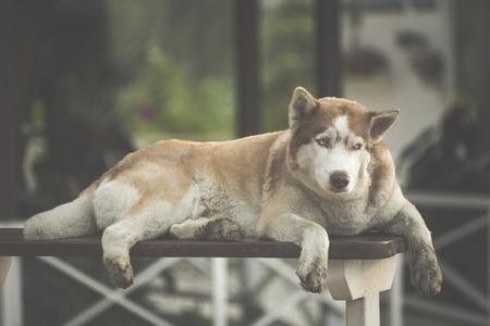 large dog: Large dog sleepy