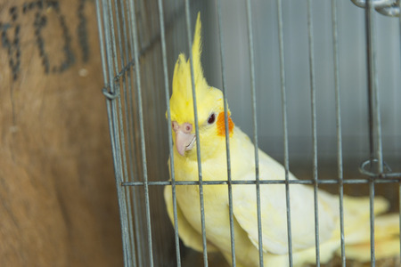 alone bird: alone bird in cage
