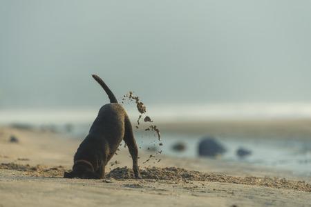 Hond graven zand op het strand