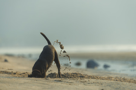 Hund diging Sand am Strand