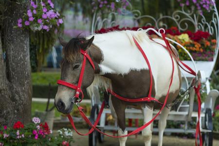 da: Da Lat City Park activities with horse (Da Lat, Vietnam)