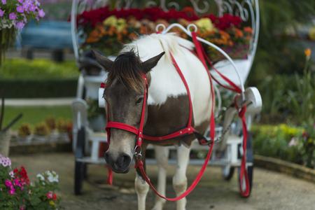 lat: Da Lat City Park activities with horse (Da Lat, Vietnam)