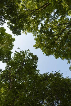 canopy: Tree canopy Stock Photo