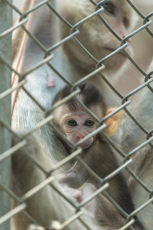 locked: monkey in locked cage