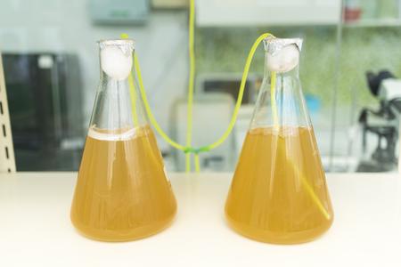 algae research process in laboratory