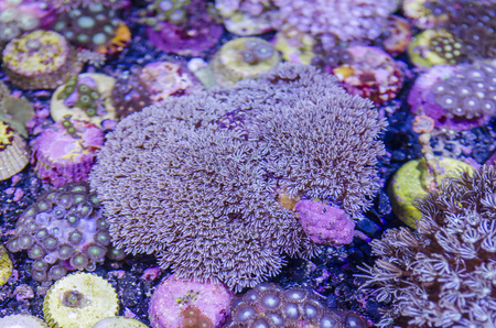 hard coral: Underwater Fantasy coral Stock Photo