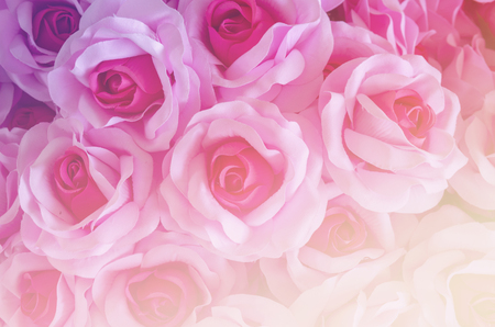 rose flower background for Valentines Day Stock Photo