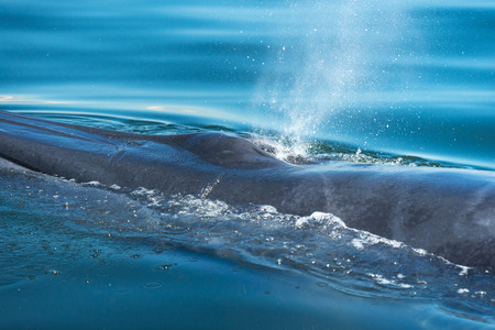 Brydes whale, watching in the Gulf of Thailand