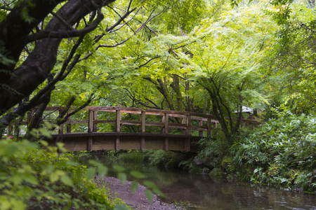 voyage: Natural Park in the Temple of Japan Banque d'images