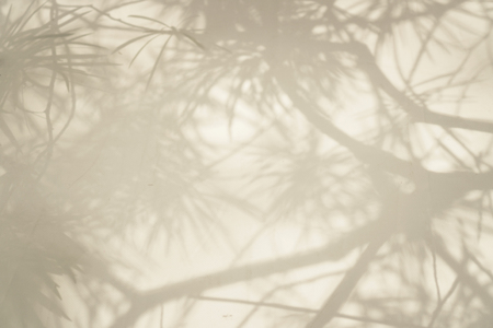 abstract background of tree branch shadows