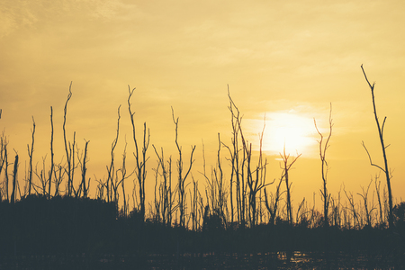 dry tree forest sunset