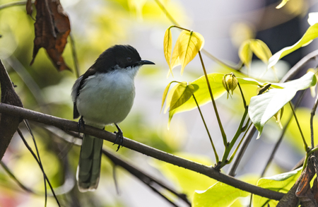 bird in tropical forest