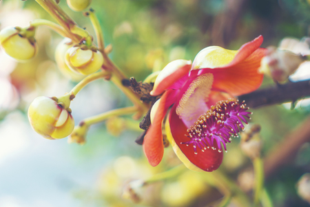 Shorea robusta flower or Sal tree flower on the tree with nature tree bokeh background