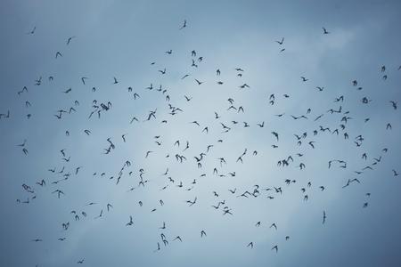 many bats flying on sky