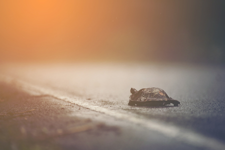 Turtles walking on the road while it rains.