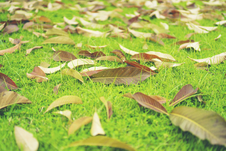 Autumn leaves on the lawn of green grass