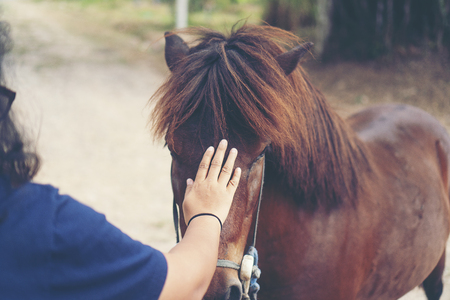 Hands that are touching the horse, the relationship between people and animals.