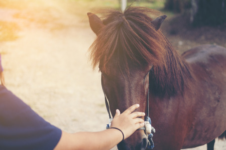 Hands that are touching the horse, the relationship