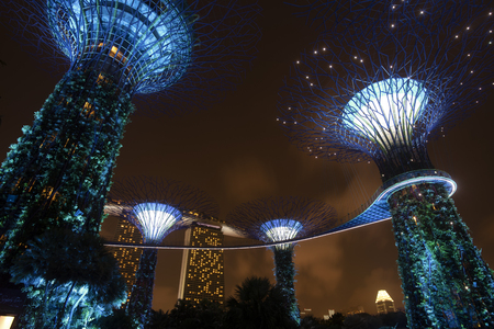 Supertree garden at night in Garden by the bay, Singapore 스톡 콘텐츠 - 115788178