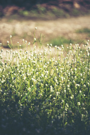 Beautiful small grass flowers in natural grassland. Stock Photo